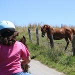 rutas a caballo turaventura